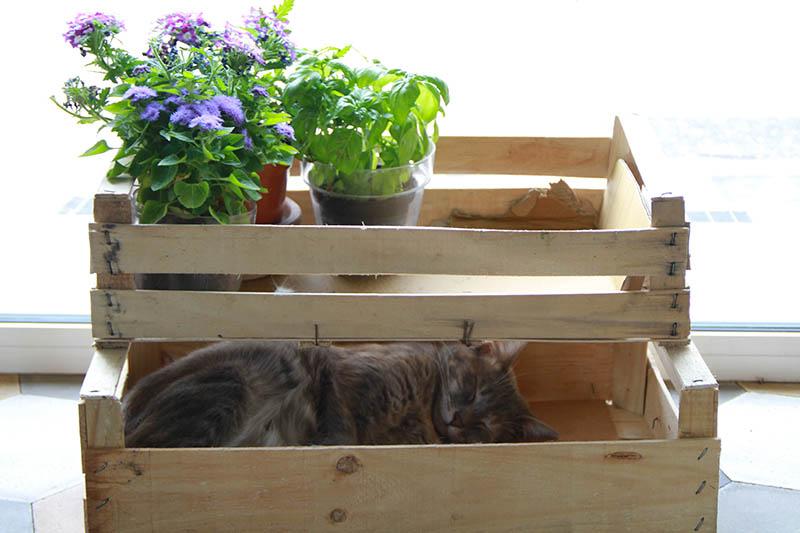 Gatto che dorme all'interno di una cassetta di legno.